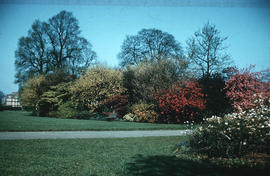Gardens - United Kingdom - Royal Botanical Garden - Kew : shrubs and trees with coloured foliage ...