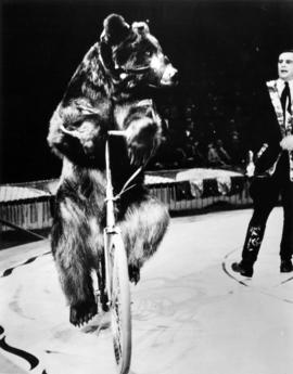 The Moscow Circus : Valentin Filatov with Maxim, one of his amazing performing bears