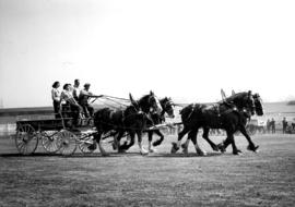 Four-horse team pulling wagon
