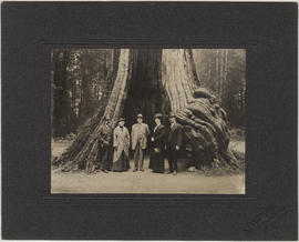 Five unidentified people standing in front of Hollow Tree