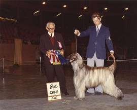 Best in Group [Hound Group: Afghan Hound]  award being presented at 1974 P.N.E. All-Breed Dog Show