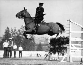 Horse jumping brush fence in equestrian competition