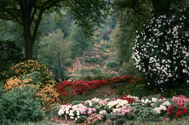 Gardens - United Kingdom : Leonardslee