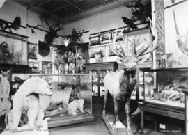City Museum and Art Gallery, natural history corner, Vancouver, B.C.
