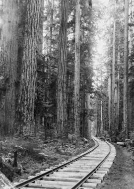 [View of railroad tracks through forest]