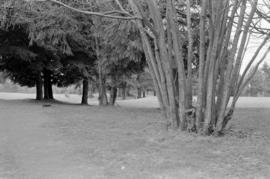 Trees on Fraserview Golf Course