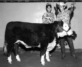 Nina Hamilton, Miss P.N.E. 1967, with man and Hereford cattle entered in 1967 P.N.E. Livestock co...