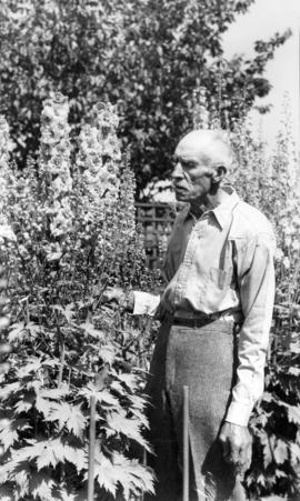 [James L. Quiney with delphiniums at 4916 Union Street, Burnaby]