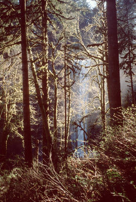 Woodland Magic Silver Falls Oregon Pacific Northwest Forest