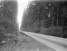 [Paved road through forest between New Westminster and Cloverdale]
