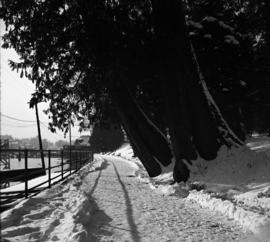 [Snowy path in Stanley park]