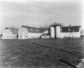 View of Main Dairy Buildings - Looking East