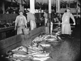 [Workers processing salmon]
