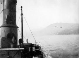 [Seagull following steamboat]