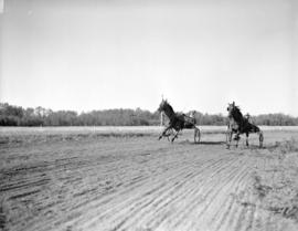 [Harness racing on Ryan's Farm]