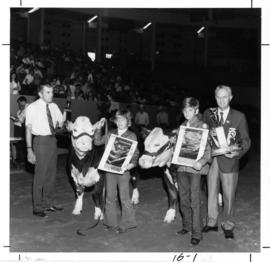 4-H steer : [P.N.E. director presenting awards in 1972 P.N.E. 4-H Stock Show and Sale]