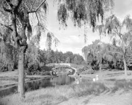 Stanley Park - bridge and weeping willows