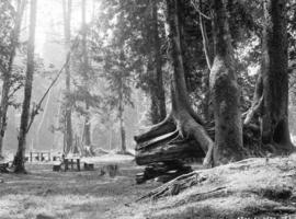 [Picnic grounds] Stanley Park