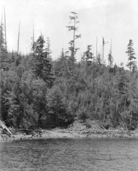 [A shore of Bedwell Bay]