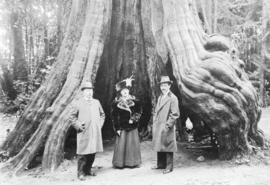 [H.T. Lockyer and others in front of the Hollow Tree at Stanley Park]