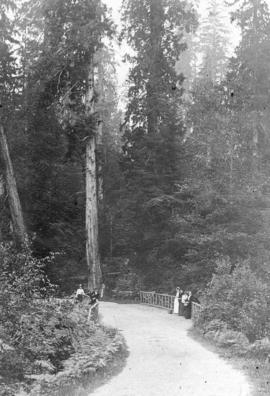 [A view of a bridge on the road to Beaver Lake]