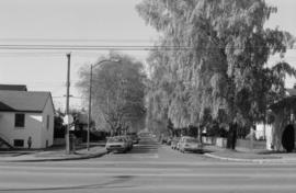 East 46th Avenue, looking west (Main to Ontario), Weeping Birch
