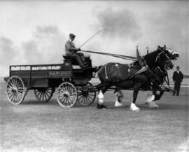 Two horse team pulling M.T. Co. wagon