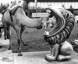 Oddball oasis : [camel with lion-shaped fiberglass water fountain on P.N.E. grounds]