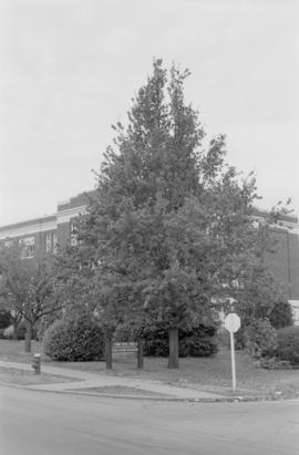 Quercus robur (N.I.I.) [Lord Byng Pool]
