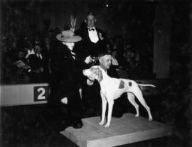 Trophy presentation at exhibition all-breed dog show [Pointer]