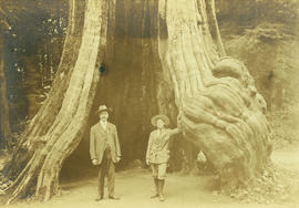 [L.D. and Theodore Taylor standing in the hollow tree in Stanley Park]