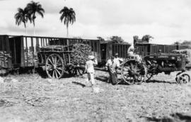 Men and carts of sugarcane beside railway