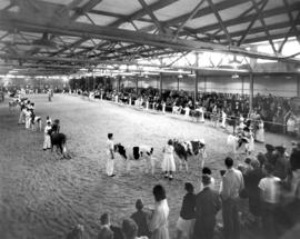 Beginning of showmanship, 12 years old and under