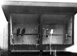 Birds perched in cage