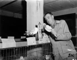Man with award-winning pigeons in 1955 P.N.E. Poultry and Pet Stock competition