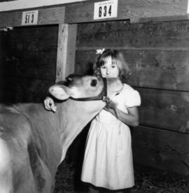 Young girl posing with cow in Livestock building