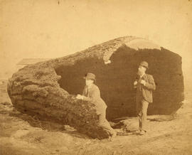 [Two men in a huge tree stump on Georgia Street between Granville Street and Seymour Street]
