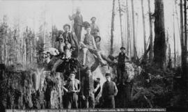 856 Felling large timber - North Arm Fraser River near Vancouver, B.C. - George Oliver's con...