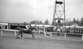 [Horse and rider crossing finish line at Hastings Park race track]