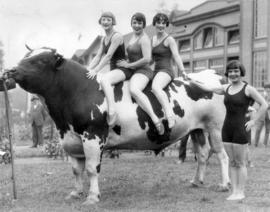 Women in bathing suits posing with a prize bull