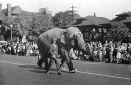 [Elephant in the P.N.E. parade]