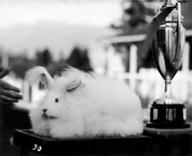 Prize-winning rabbit