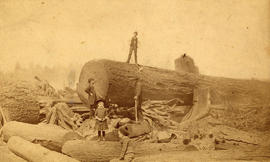 [A huge log near the corner of Georgia Street and Seymour Street]