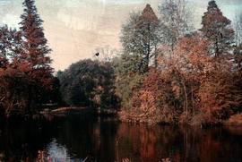 Gardens - United Kingdom - Royal Botanical Garden - Kew : lake in autumn