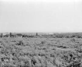 [Field and houses near Fraser Avenue]