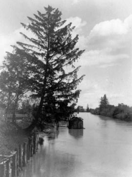 [Leaning Tree Slough on the Fraser River]