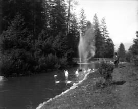Stanley Park, first duck pond