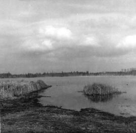 [View of Lake Terrell]