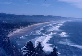 Habitat : Oregon Coast