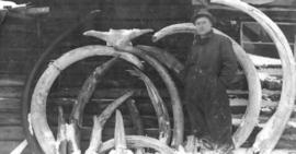 [Mammoth Tusks Found Under Ground on 3 Above Discovery Sulphur Creek]